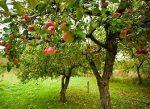 Marcher Apple Network