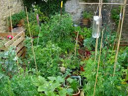 HGN Gathering – Online Vegetable Gardening advice session