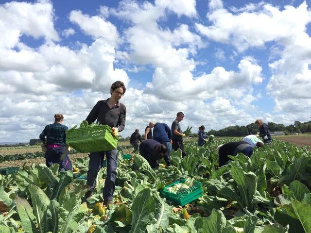 """Online Offerings: """"Gleaning"""" training webinars for community groups"""